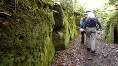 大噴火の痕跡、樽前山麓の楓沢 緑の回廊、岩壁覆うコケ