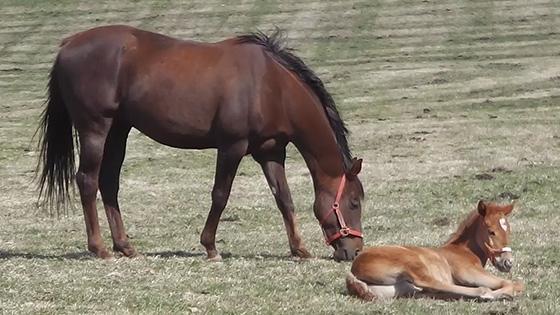 競走馬の出産ピーク 新冠・ビッグレッドファーム