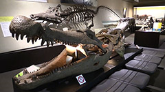 北大総合博物館が改装 ロケットや化石 12学部展示